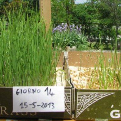 esperimento agricoltura con shungite